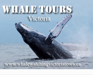 Whale Watching Victoria Tours BC Canada