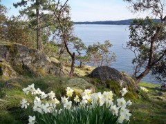 Daffodil Cove Cottage Salt Spring Island